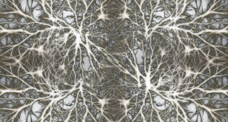 hypocretin neurons stefani ruper