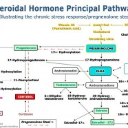 HPA axis: what is pregnenolone steal?