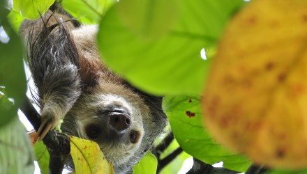 this week in paleo lessons learned from sloths