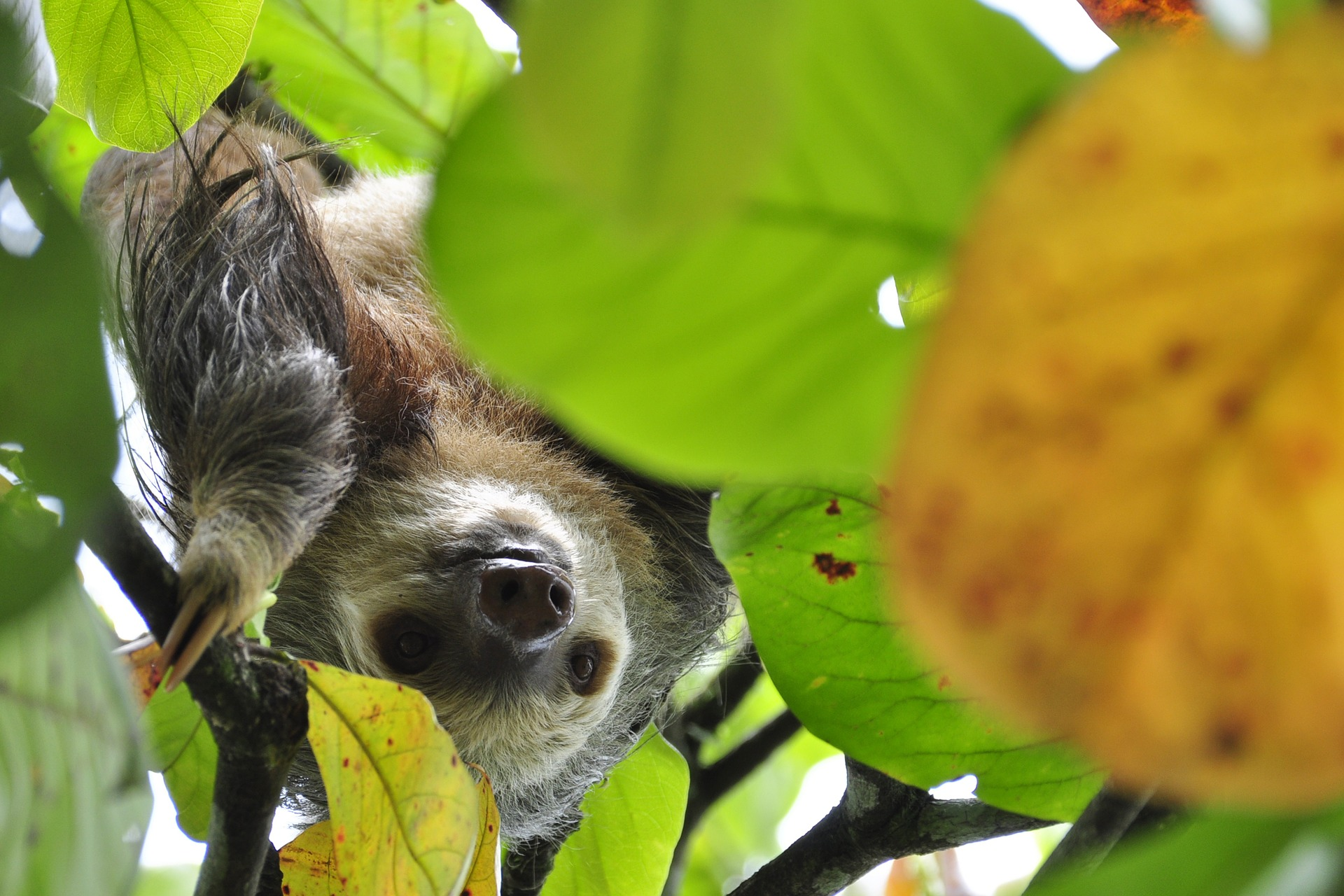 This Week In Paleo: 5 Lessons Learned From Sloths