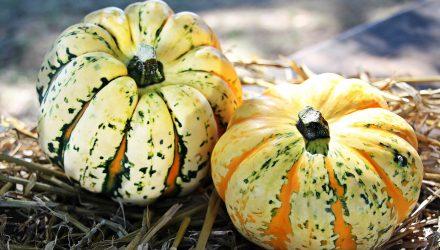 paleo for women pumpkin spice